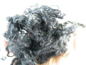 画像1: 房のままの羊 「ナチュラル グレイ系巻き毛」 (1)