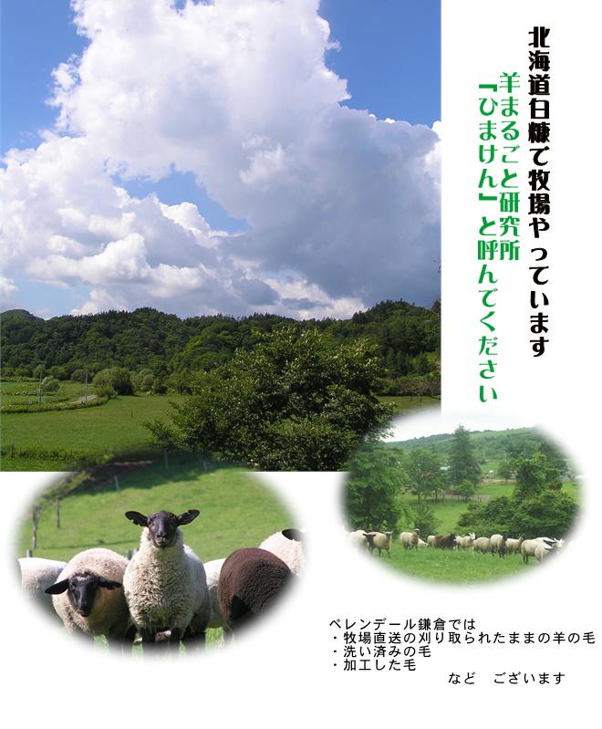 国産羊毛酒井さんの羊2