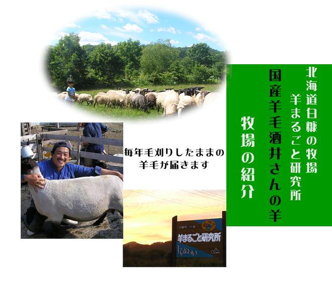 国産羊毛酒井さんの羊1