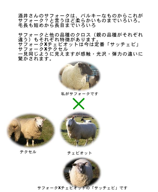 国産羊毛酒井さんの羊3