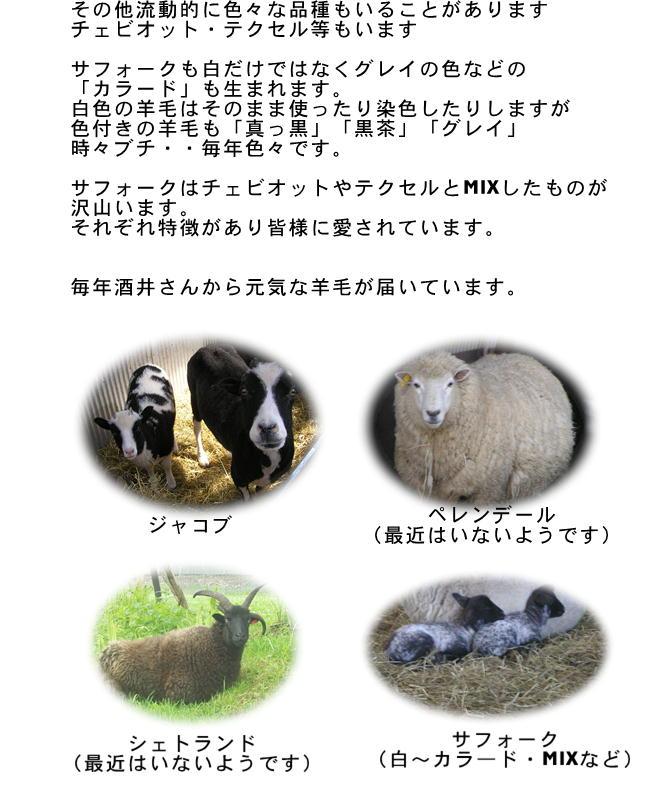 国産羊毛酒井さんの羊4