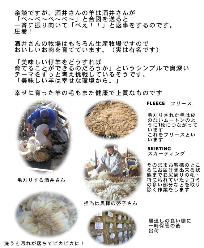 国産羊毛酒井さんの羊5
